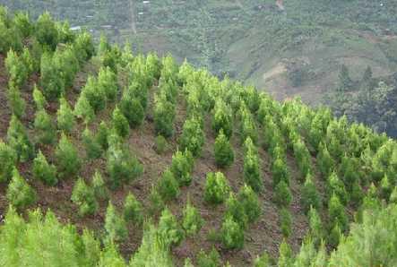 cubierta-forestal-crece-region-ARCHIVO_PREIMA20120528_0053_32
